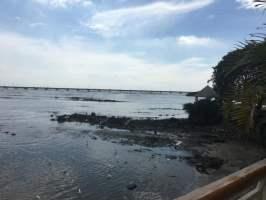 Coco del Mar Panama